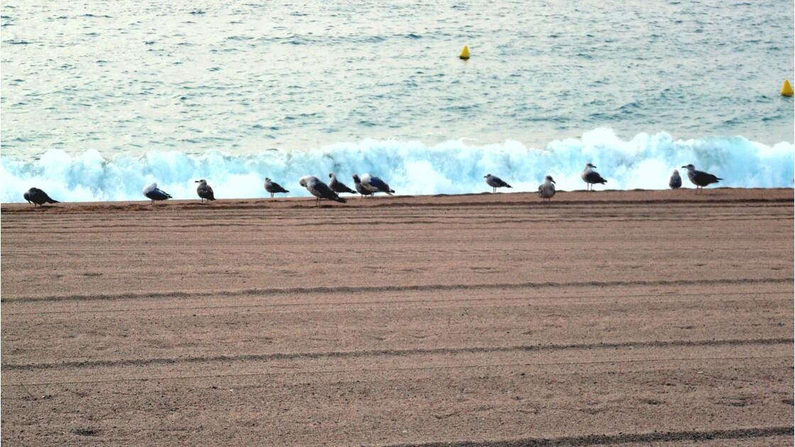 Les mouettes de Playa de Aro