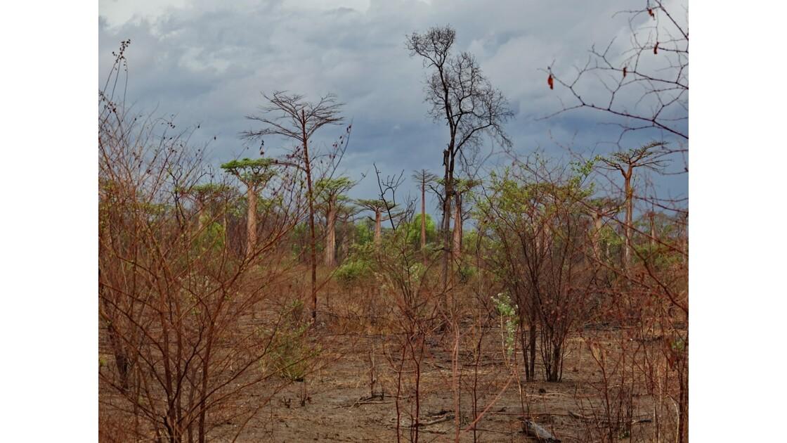 Madagascar De Morondava à Manja 9