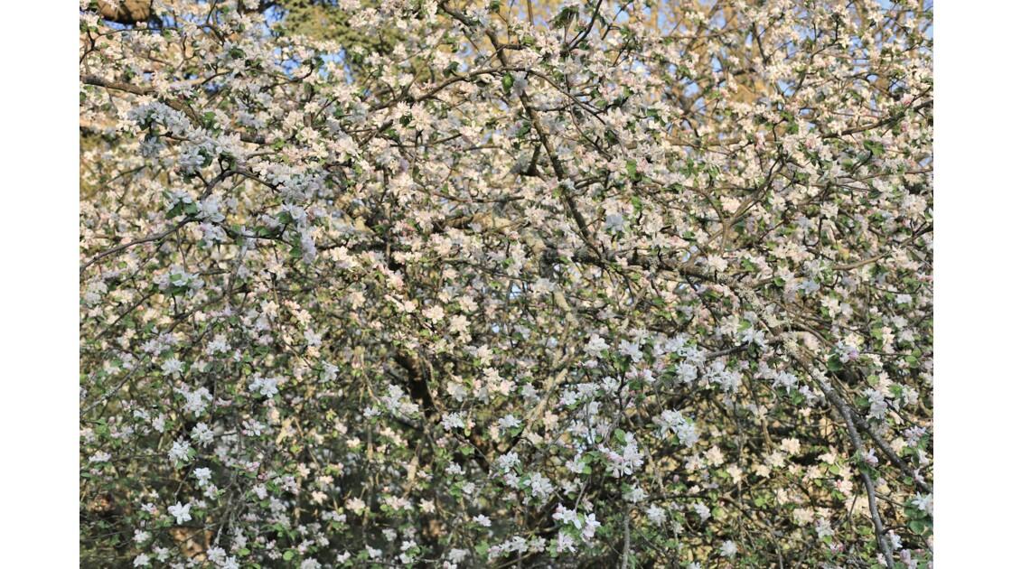 Le printemps de fleurs