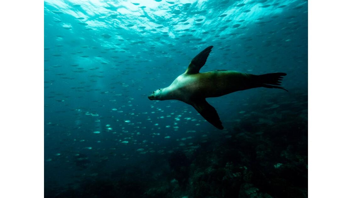 Vie sous marine La Paz