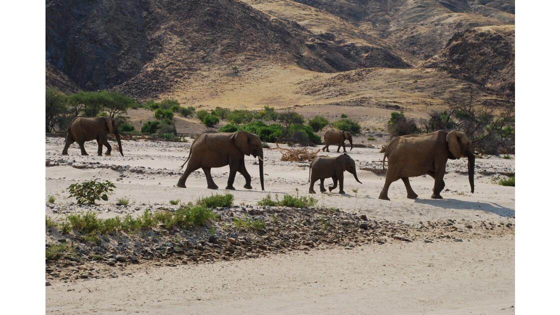 Troupeau d'éléphants dans le Damaraland