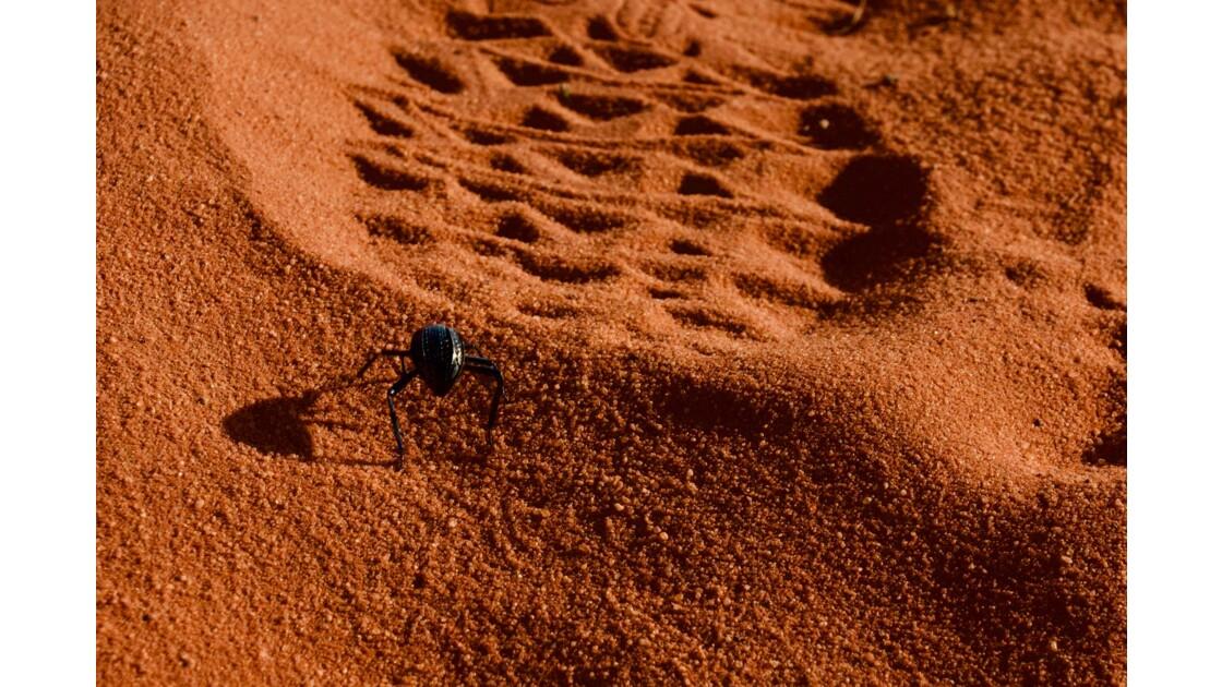 Scarabé du désert du Wadi Rum