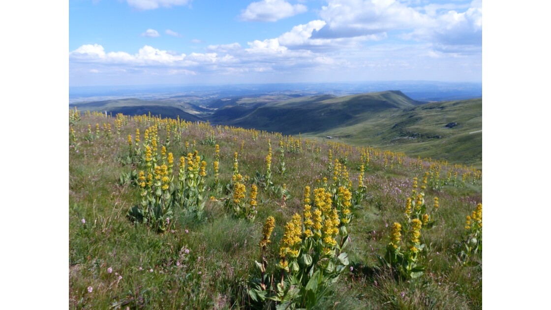 Rando Nature en Auvergne