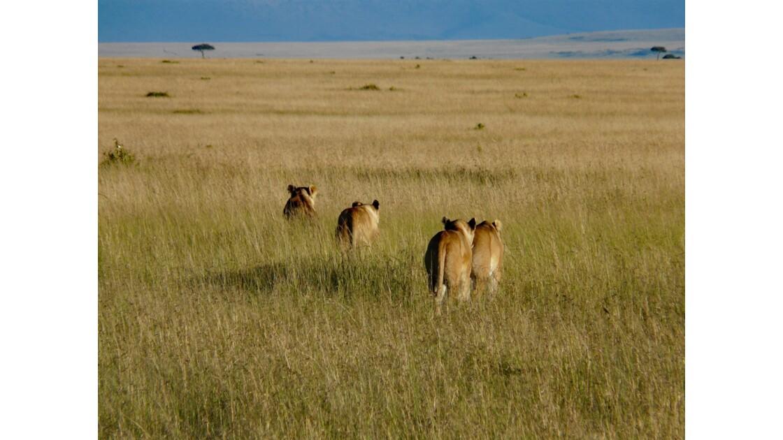 Kenya Parc Masai Mara La famille lion 3