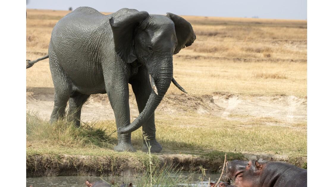 L'Éléphant et l'Hippopotame - Août 2019