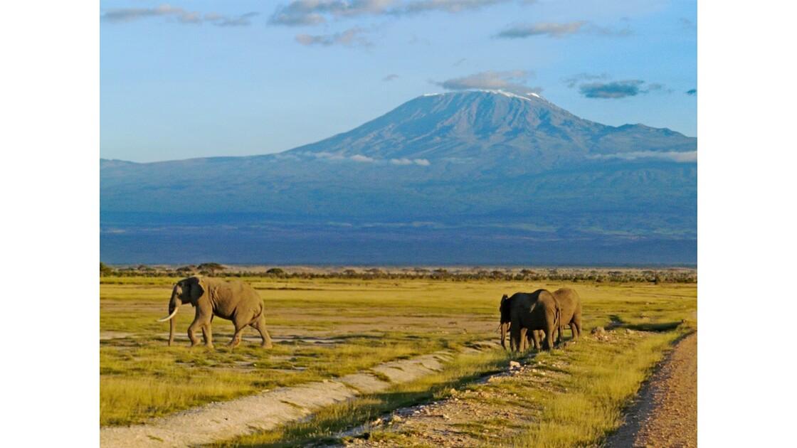 Kenya Parc d'Amboseli Sunset sur le Kilimandjaro