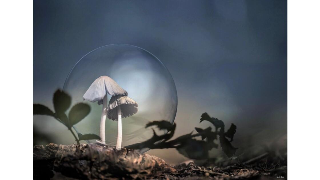 Dans sa bulle