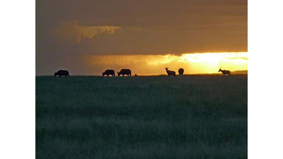 Kenya Parc Masai Mara soir d'orage