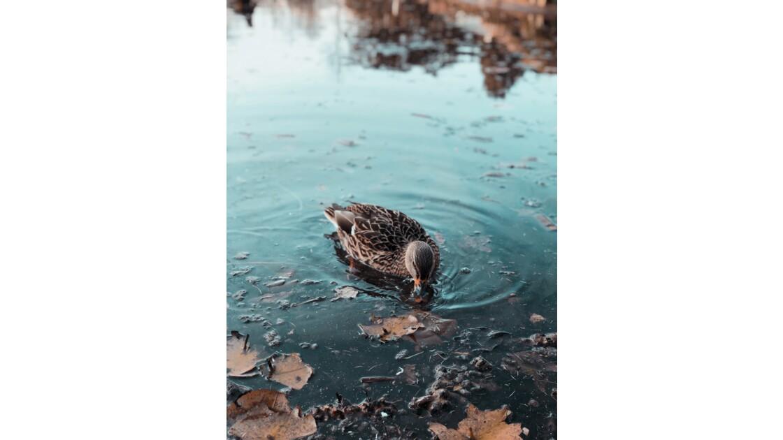 Baignade en eaux claires