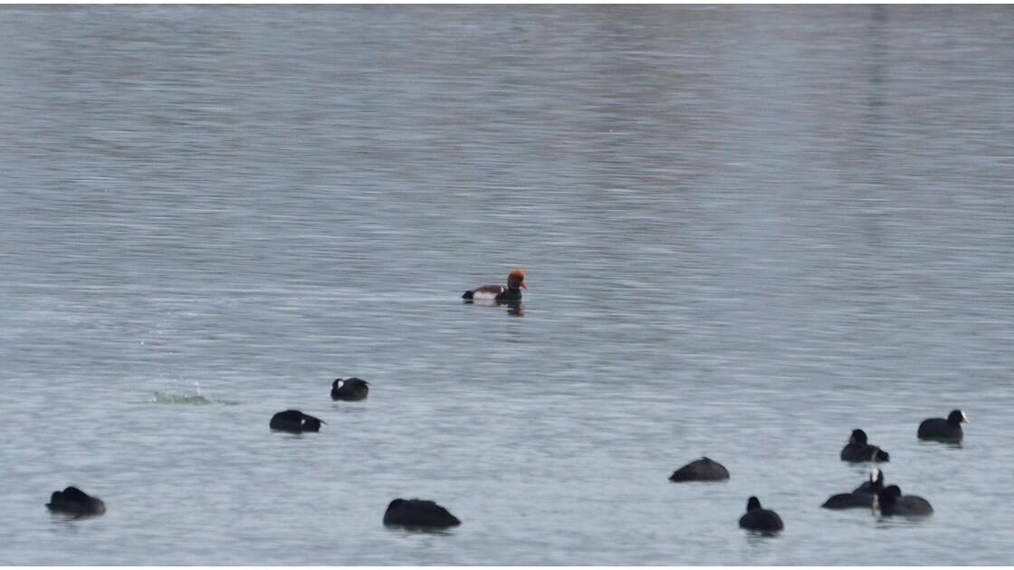 Nenette en balade sur l'eau