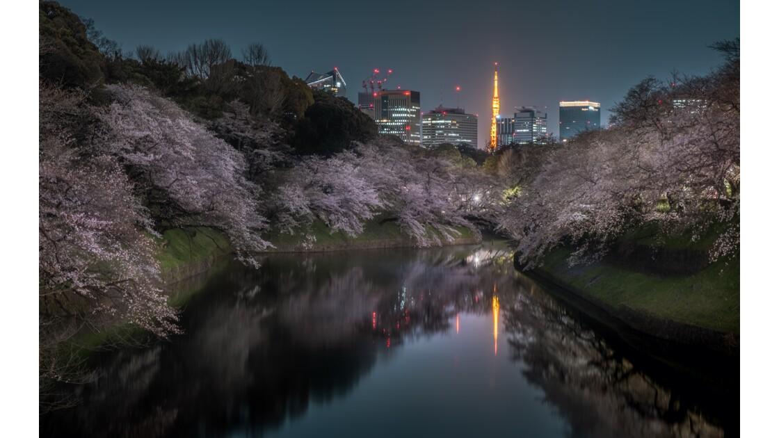 Sakura & Tokyo