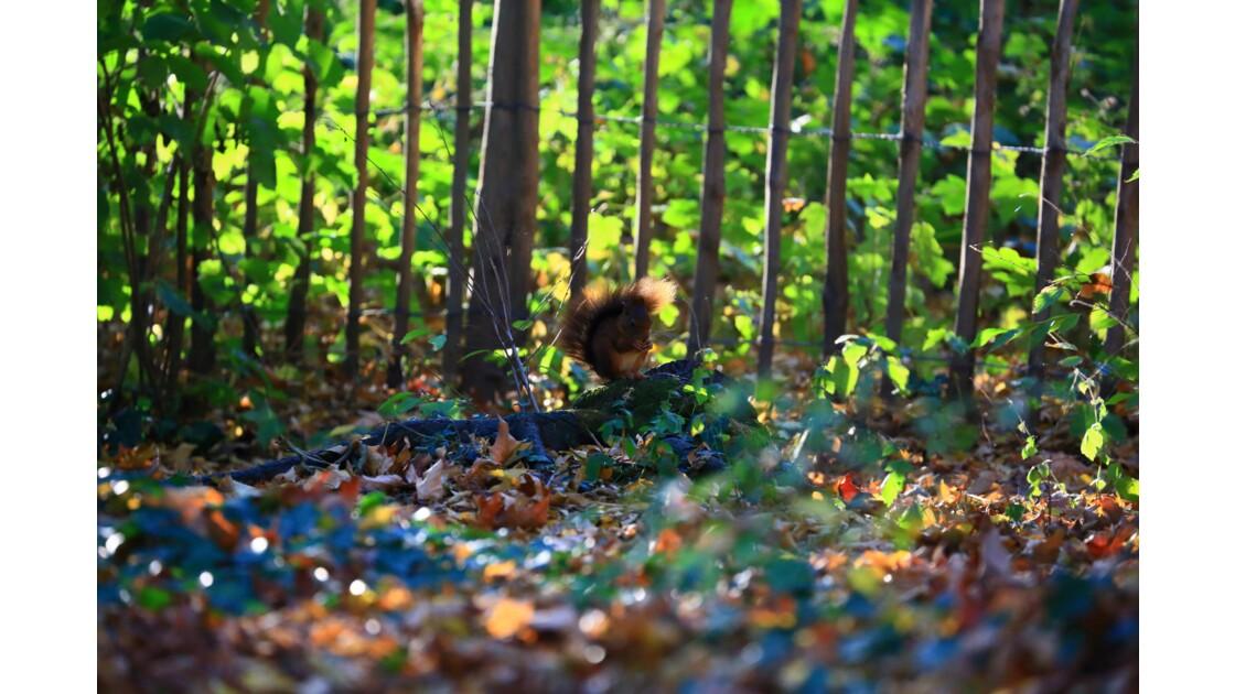 l'écureuil et ses noisettes