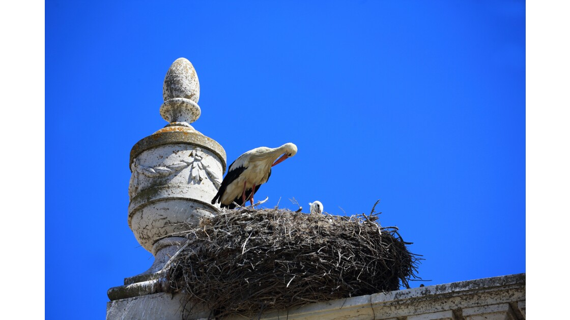 Les cigognes de Faro