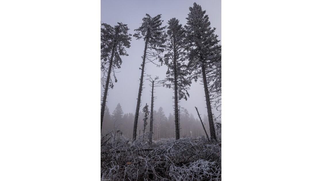 La brume dans la forêt du Pilat