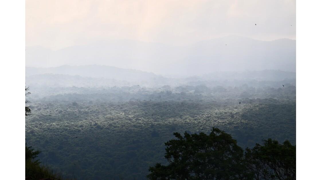 Réveil brumeux sur la savane
