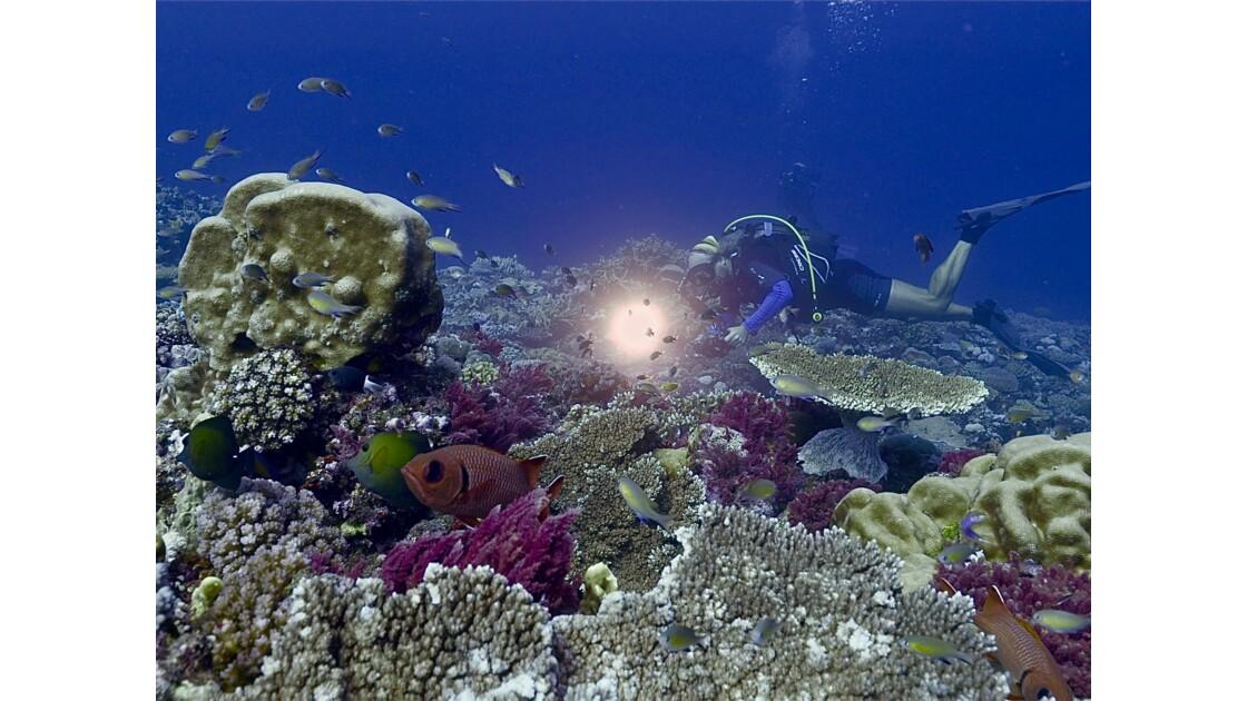 Vie sous marine de Noume