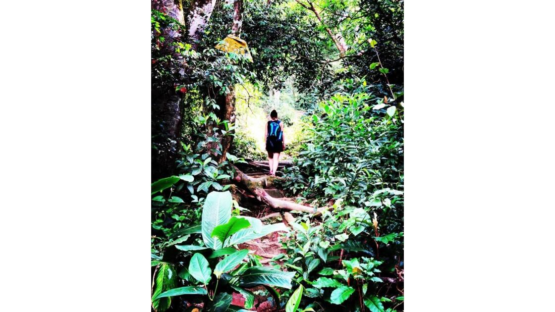 Jungle brésilienne