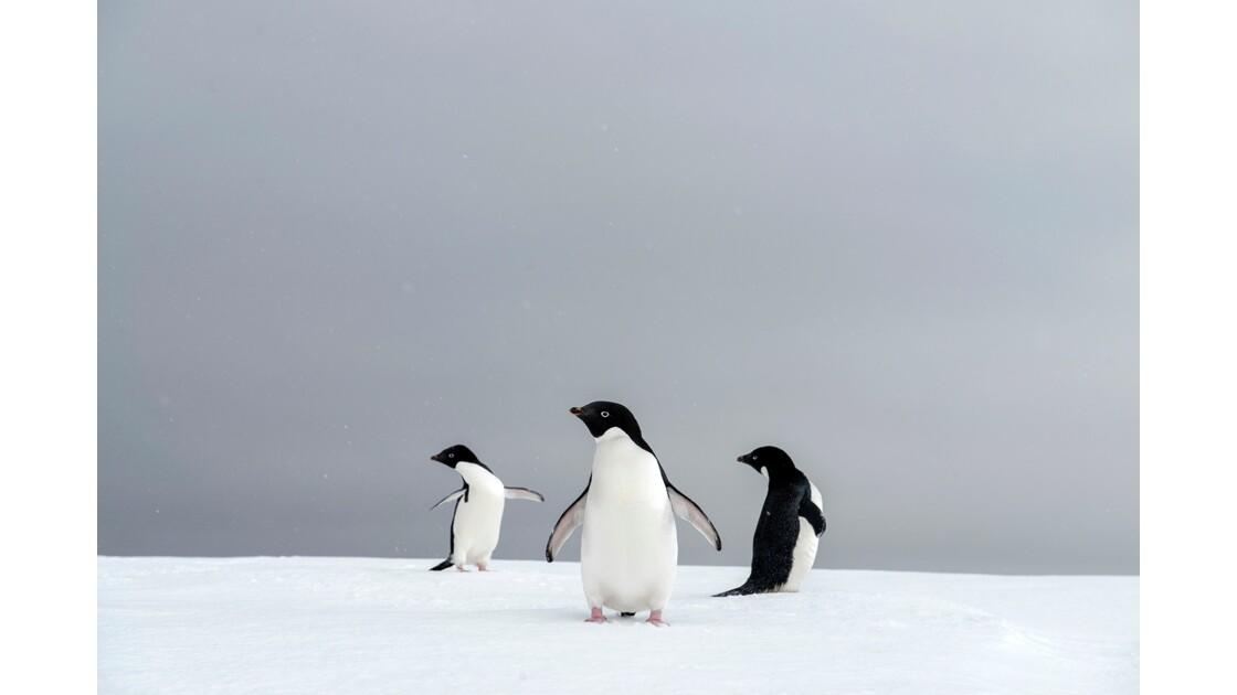 Chorégraphie en Antarctique