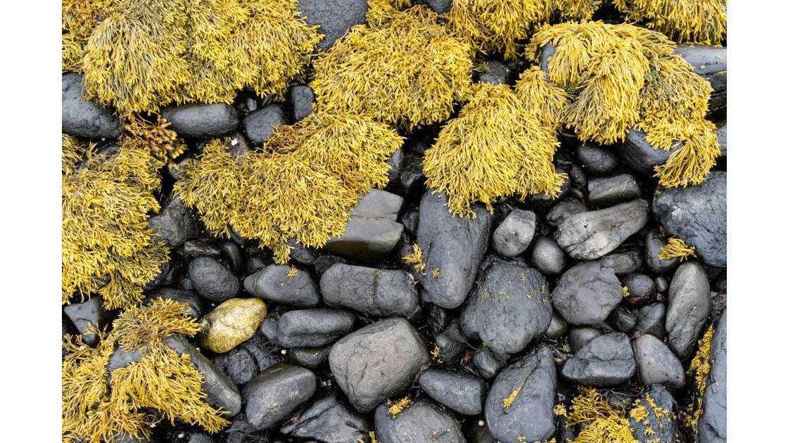 Contrastes - Coral beach - Skye
