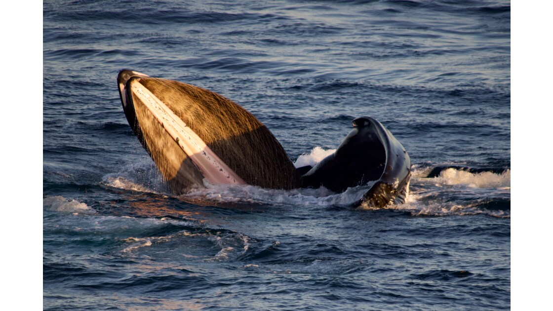 Le repas de la baleine