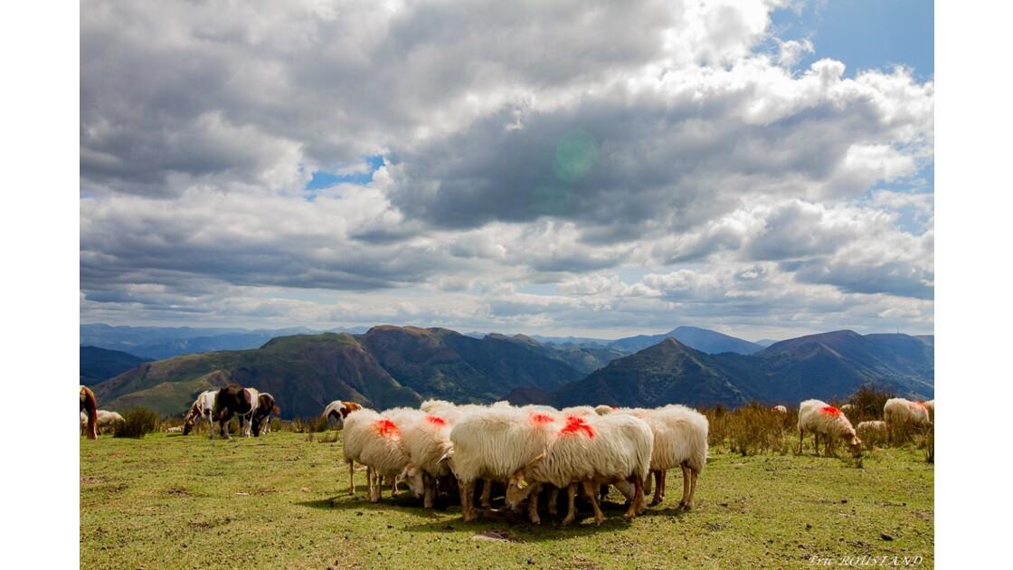 Les Montagnes Basques.....vues depuis Artzamendi