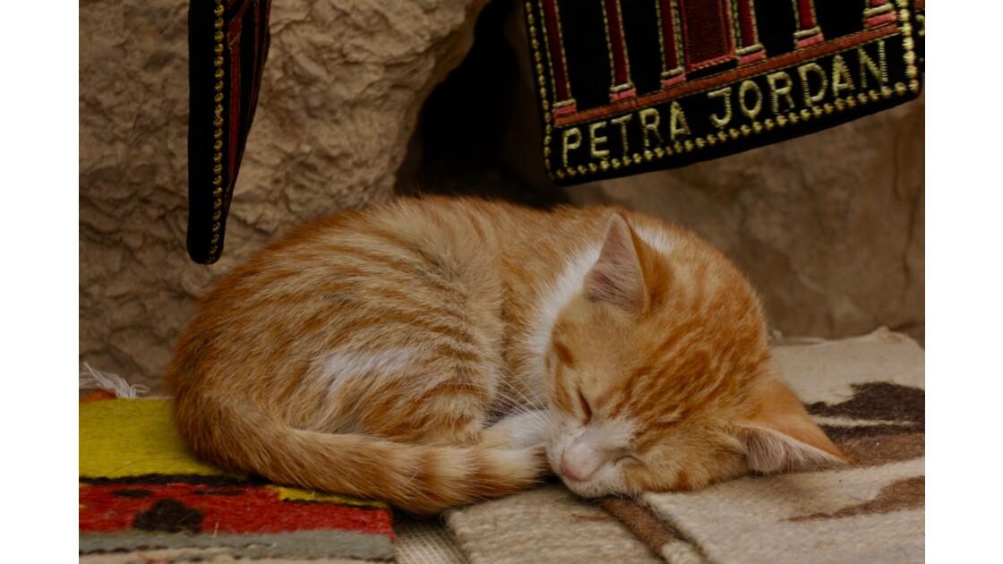 Chaton en pleine sieste dans magasin de souvenir