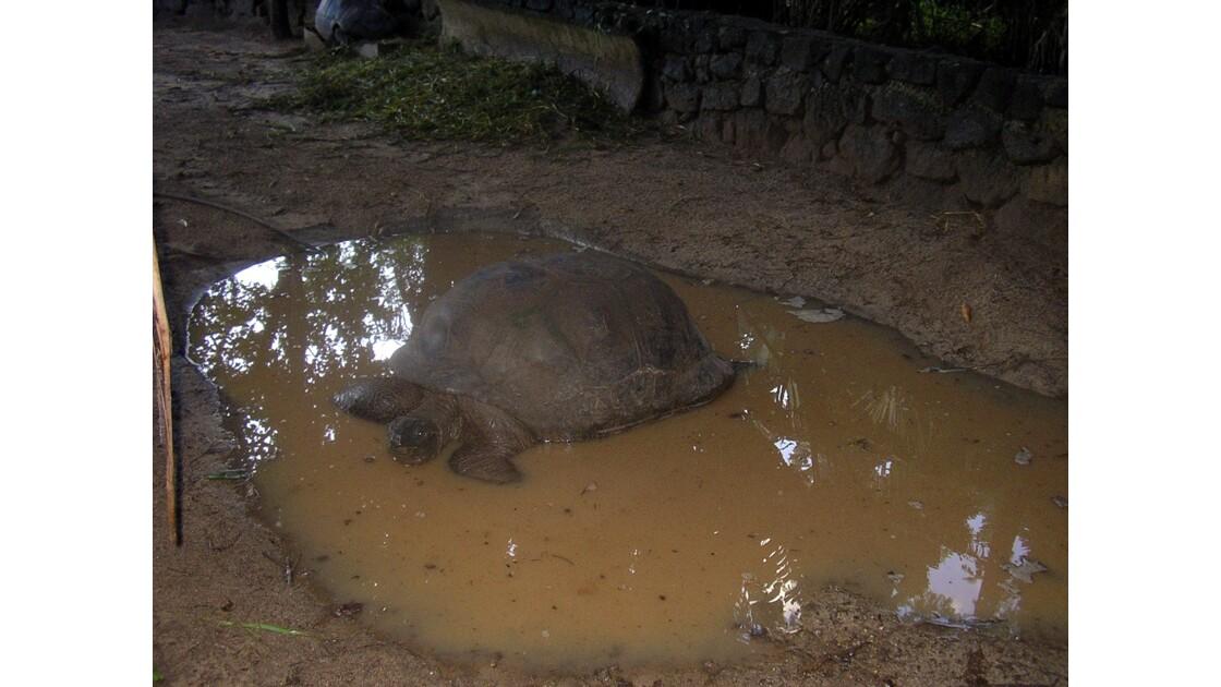 Les tortues des terres de couleur