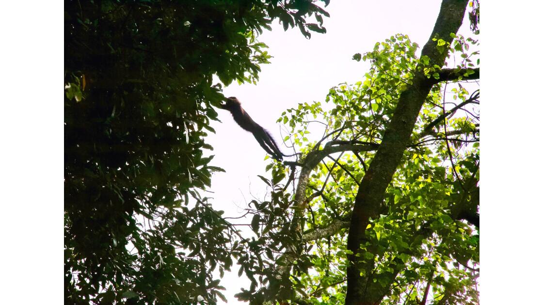 La Canopée de la Forêt tropicale de Nyungwe (Rwanda)