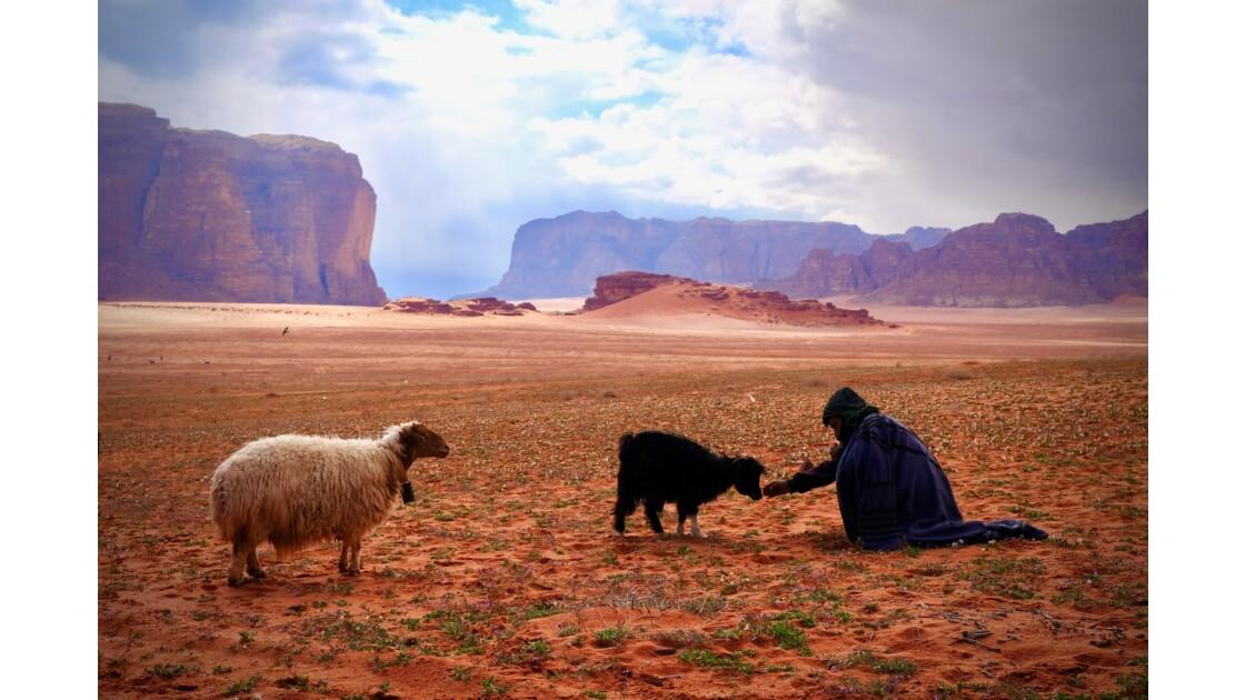 Wadi rum entre chiens et loups, Jordanie
