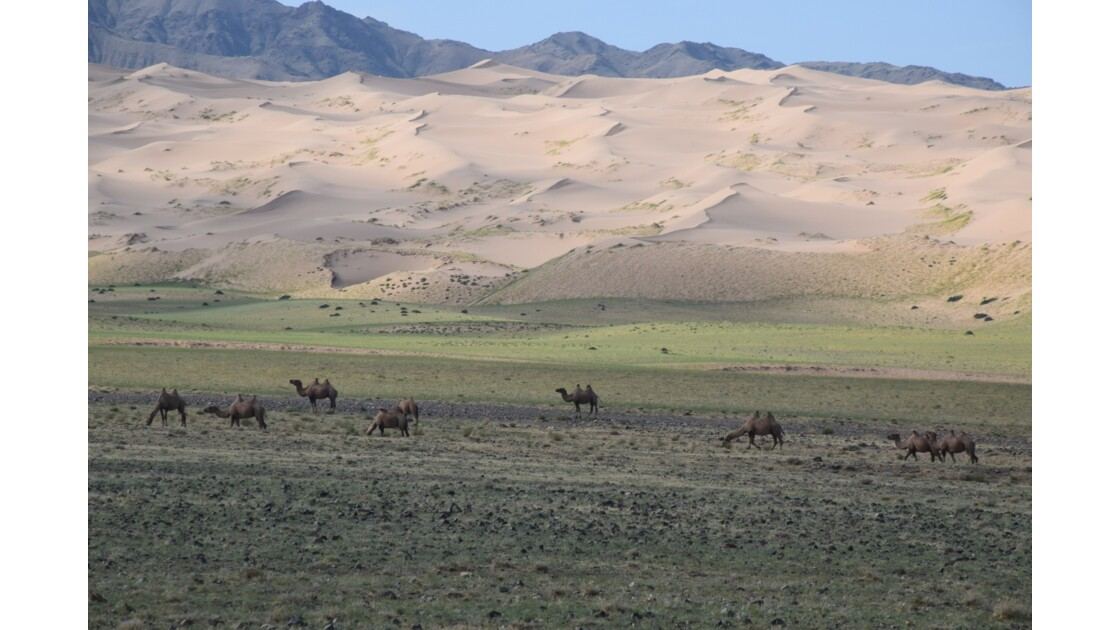 Dunes et pâturage