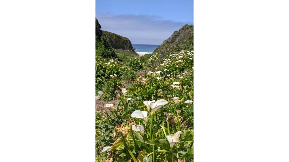 Landscapes in Spring - Calla Lily Valley, Big Sur CA