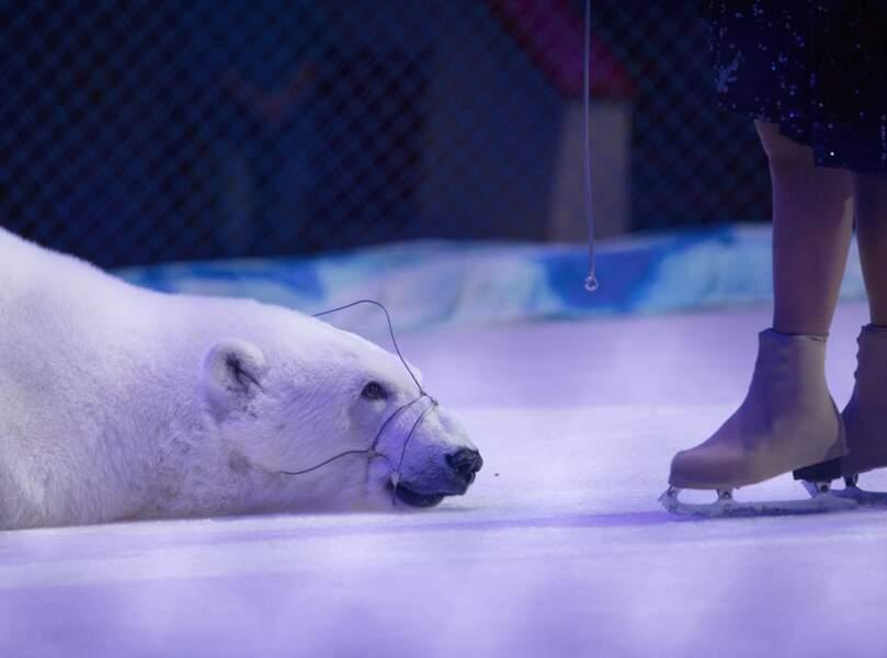 Un ours polaire et sa dresseuse Yulia Denisenko