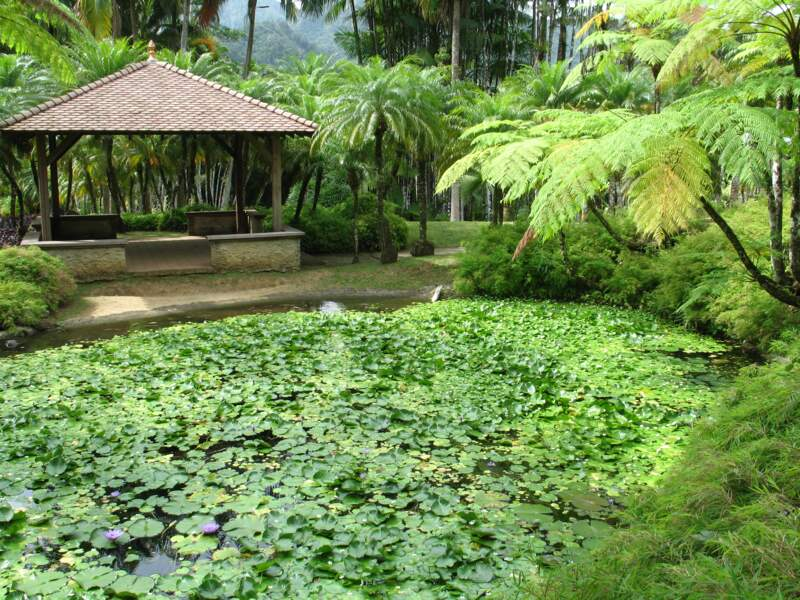 Le jardin de Balata en Martinique