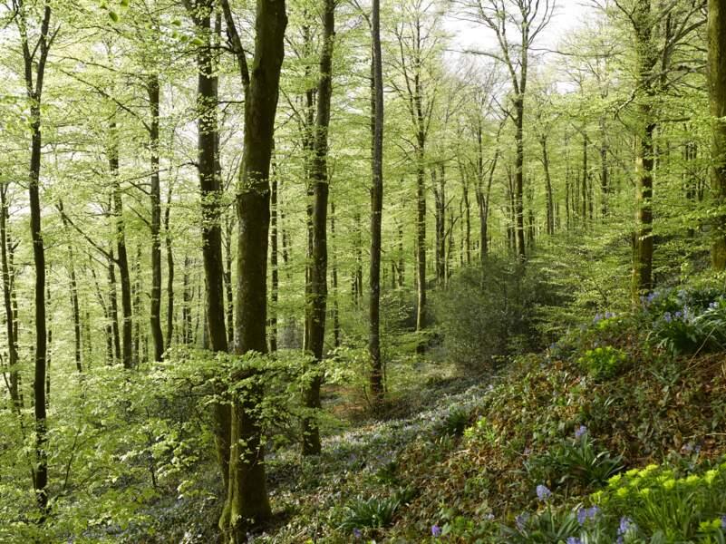 Forêt domaniale des Soulanes de Nore, D87