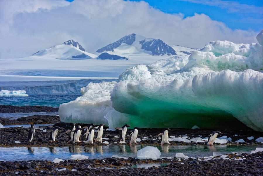 Manchots en Antarctique par Philippe Bolle