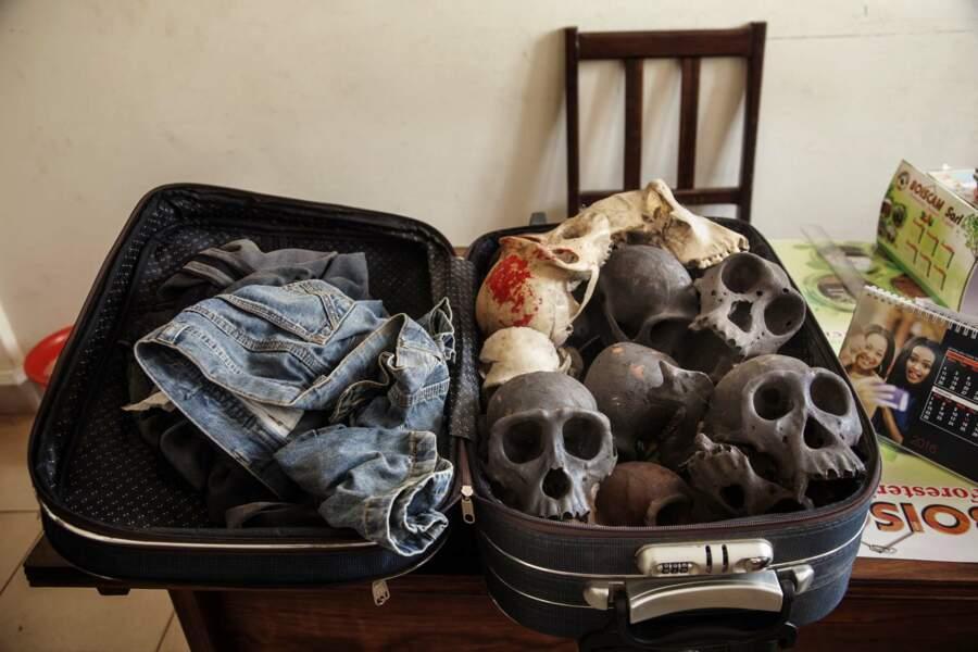 Trafic de crânes de chimpanzés, vendus 30 000 francs CFA pièce (45 euros)