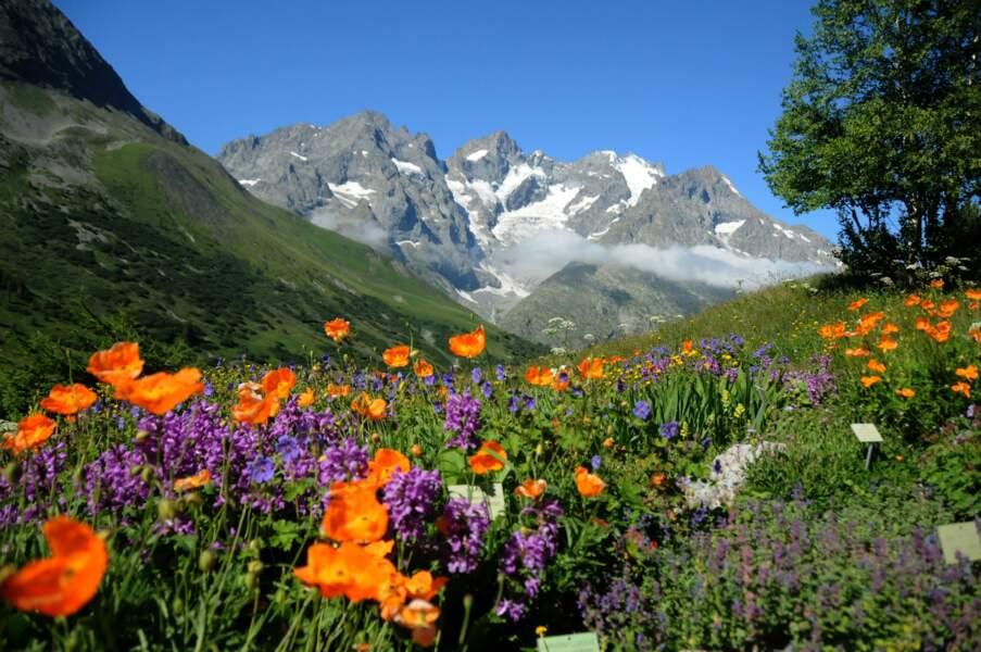 L'espace du Caucase avec sa vue sur la Meije