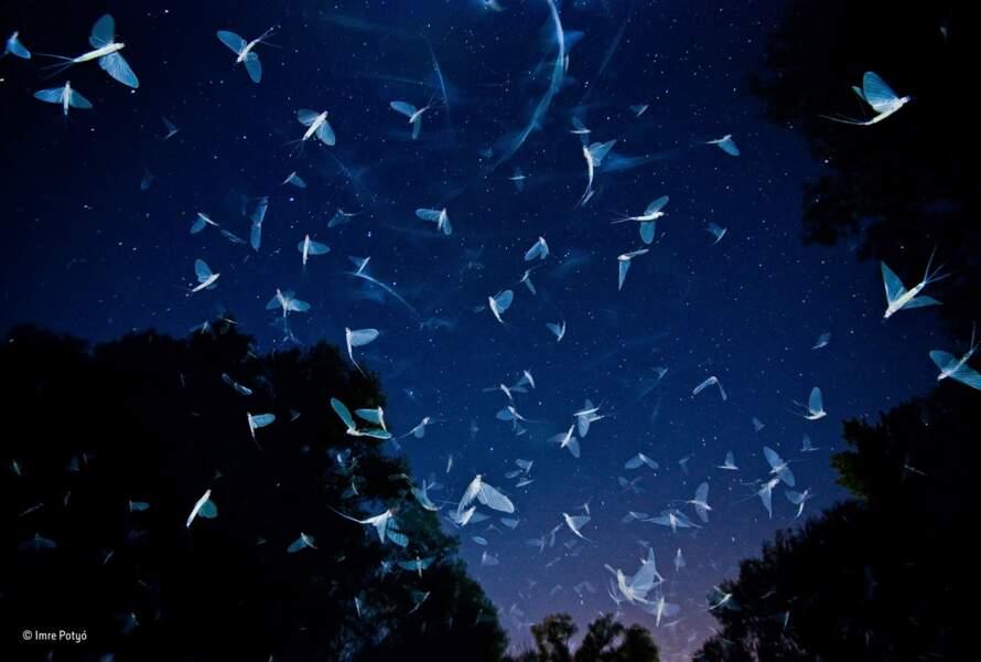 Un foisonnement d'ailes soyeuses et éphémères / Imre Potyo, catégorie invertébrés