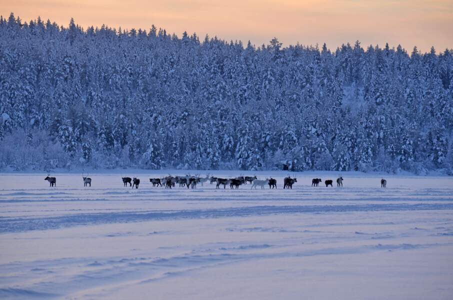 Rennes sur le lac Ounas en Laponie finlandaise, par Pascal Gaudry / Communauté GEO