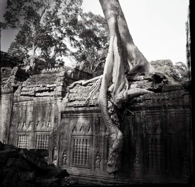 Racines de fromager - Preah Khan