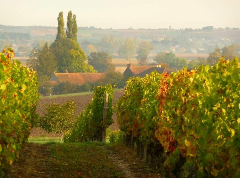 Vignoble à Saint-Pourçain-sur-Sioule, en Auvergne, par fanette03