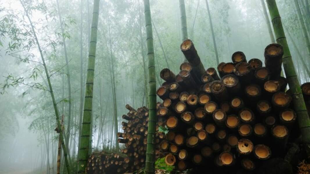 Privilégier le bambou