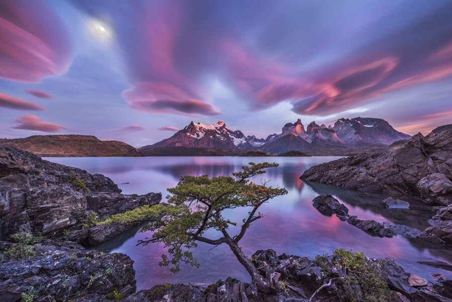 Rêves roses / Patagonie, Chili
