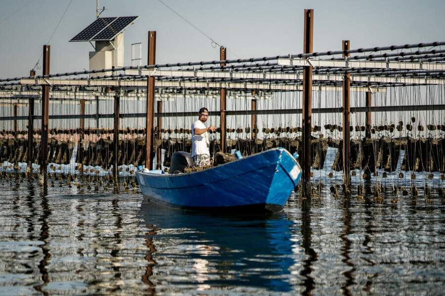 Les moules de Scardovari : les coquillages miraculeux du delta du Pô