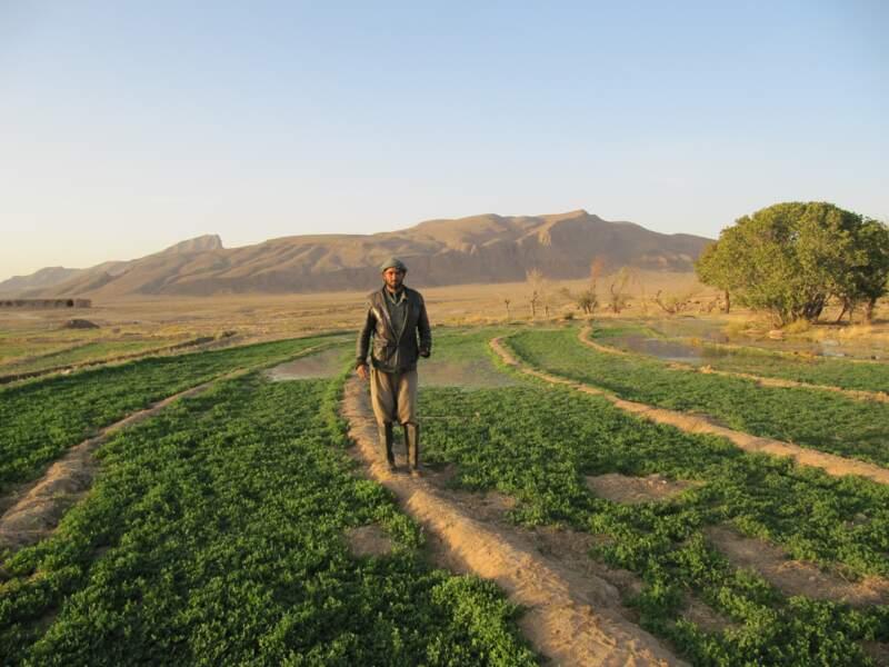 Rencontre avec un ouvrier agricole afghan, sur la route d'Ispahan