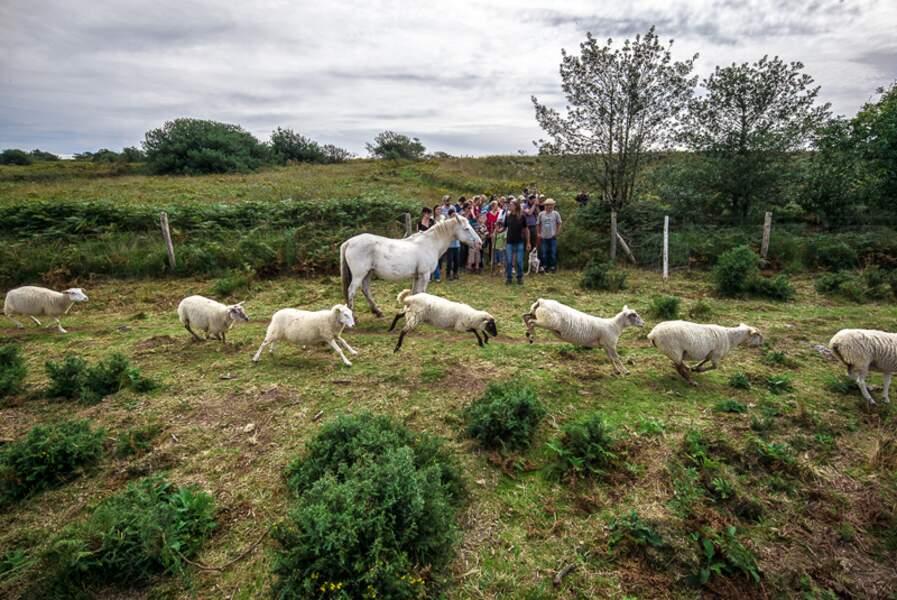 À saute-mouton sur la lande