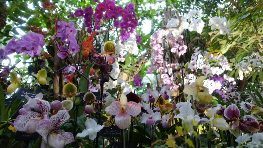 """""""1001 orchidées"""""""
