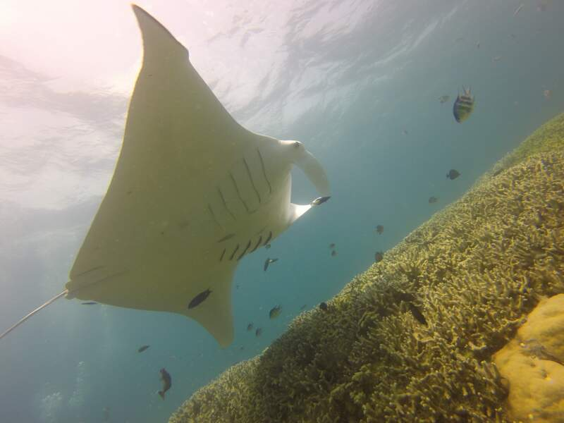 9e spot: Manta Ray Night Dive à Hawaï