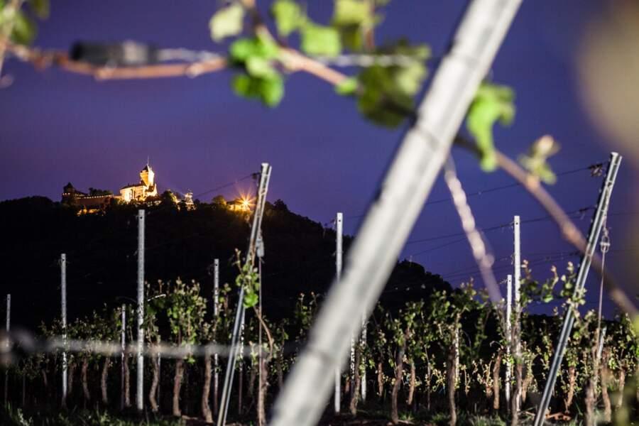 Le château du Haut-Kœnigsbourg (commune d'Orschwiller, Bas-Rhin) vu du vignoble de Saint-Hippolyte