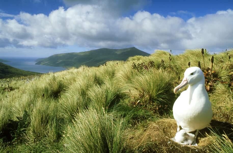 Le repaire de l'albatros royal